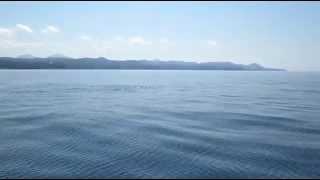 дельфины в лермонтово июль 2015(, 2015-08-02T13:27:43.000Z)