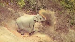 Мир Дикой природы Таиланда фильм National Geographic
