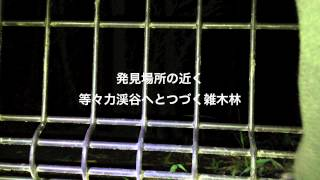 「ラスカル発見!」  撮影・編集 小谷周平