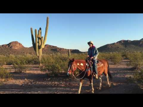 Tucson Mountain Stables