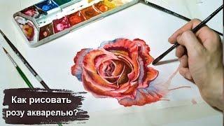 Как рисовать розу акварелью - уроки рисования для начинающих - скоростное рисование