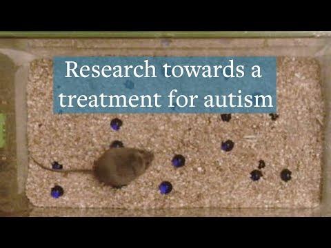 Researchers reduce autism symptoms in mice using CRISPR