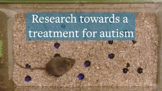Research towards a treatment for autism