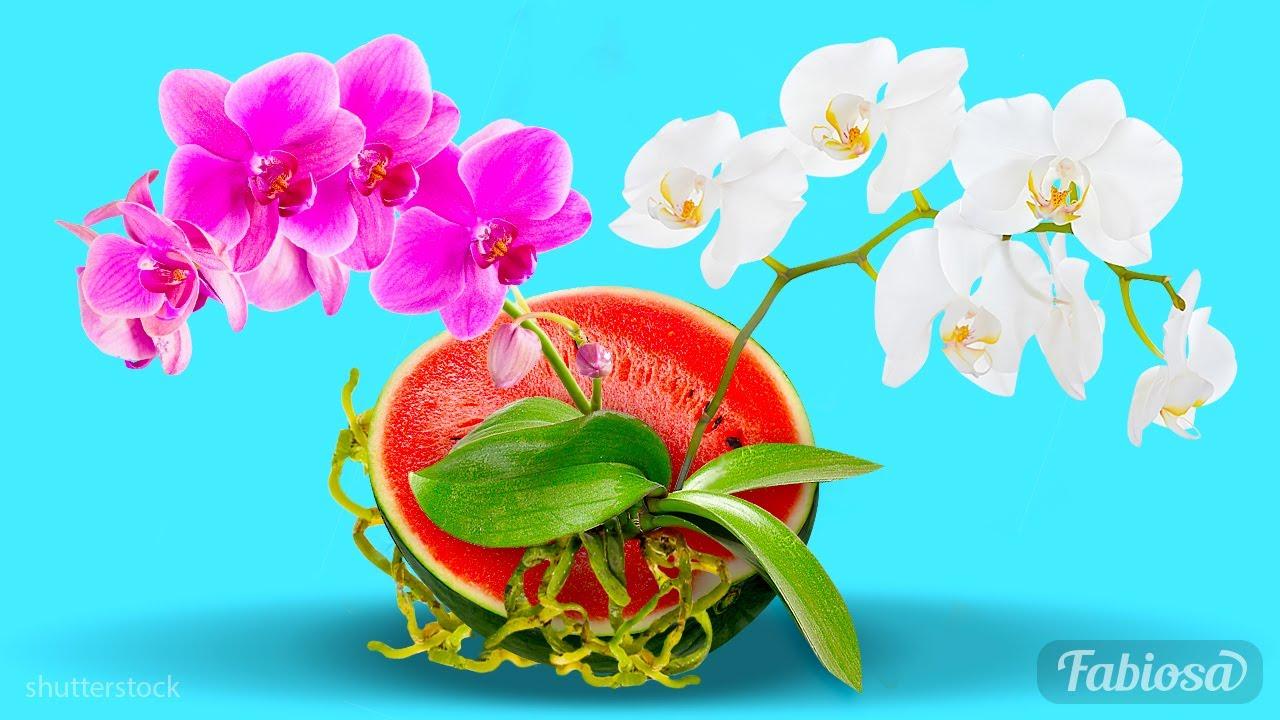 Download Come far fiorire le orchidee tutto l'anno: Semplici consigli per il giardinaggio