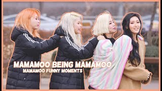 Mamamoo being Mamamoo...