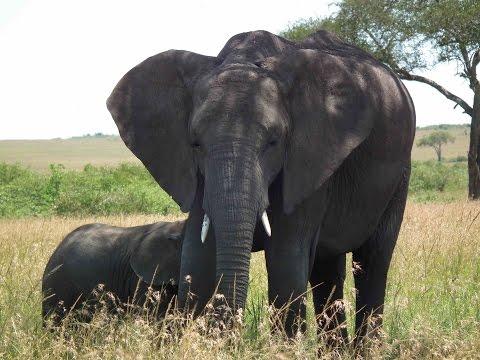 Fantastic wildlife on safari in Kenya 2013 part 2 HD