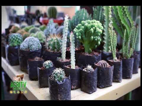 AGRITV SEPTEMBER 3, 2017 EP Urban Gardening CACTUS