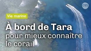 Tara : au chevet du corail | Reportage CNRS