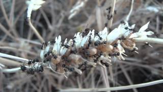 SAN PROCOLO 1 - butterfly resting, bird