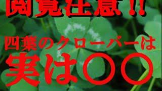 【都市伝説】【雑学】【閲覧注意】四葉のクローバーは実は○○ 四つ葉のクローバー 検索動画 12