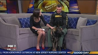 'Live PD' with Pasco K9 'Shep' (oh, and Deputy Carmack too)