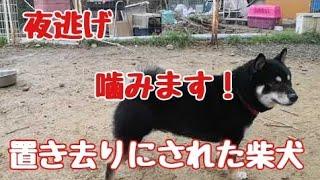 Dog Rescue A&Rからのお願い 大変図々しいと思いますが、ご支援お願いし...