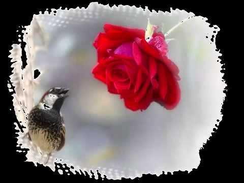 физической нагрузке краткое содержание соловей и роза ТЕРМОБЕЛЬЕ может быть
