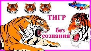 Тигр потерял сознание  Цирк  Дикие животные  Магнитогорск