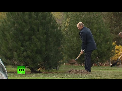 President Plants: Putin shovels at APEC Partnership Forest