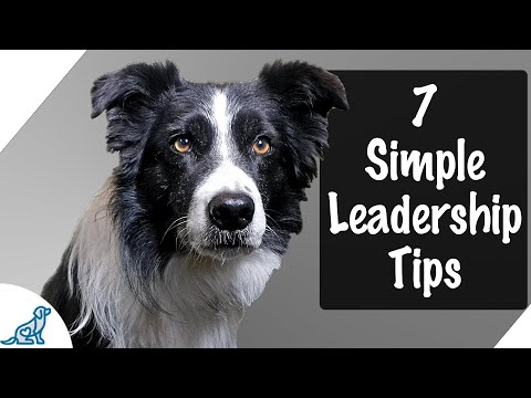 7 Tips To Be An Amazing Leader For Your Puppy