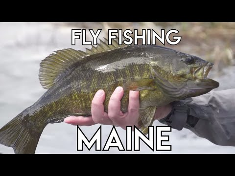Maine Fly Fishing | Smallmouth Bass & Landlocked Salmon