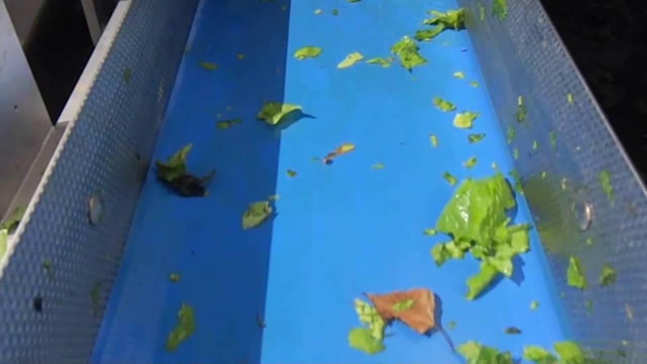 Spinach sorting machine Genius - TOMRA Sorting