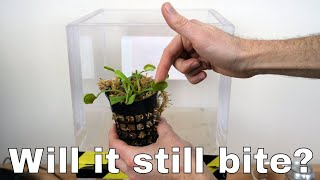 Can a Venus Flytrap Still Bite In a Vacuum Chamber? Will it Survive?