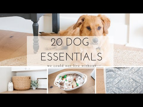 20-essential-dog-products-we-could-not-live-without