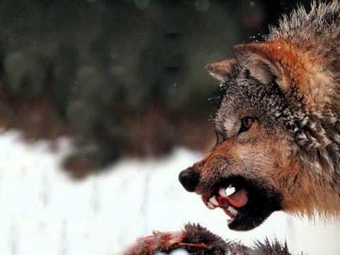 Of Wolf And Man Metallica *with lyrics*