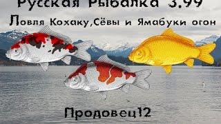 Русская рыбалка 3.99 карпы Кои АСАГИ