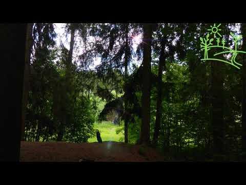 Насыщенное пение птиц в густом лесу