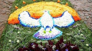 ПСКОВ. ПЕЧОРЫ. Цветочный ковер в честь Успения Богородицы(, 2014-08-30T10:19:37.000Z)