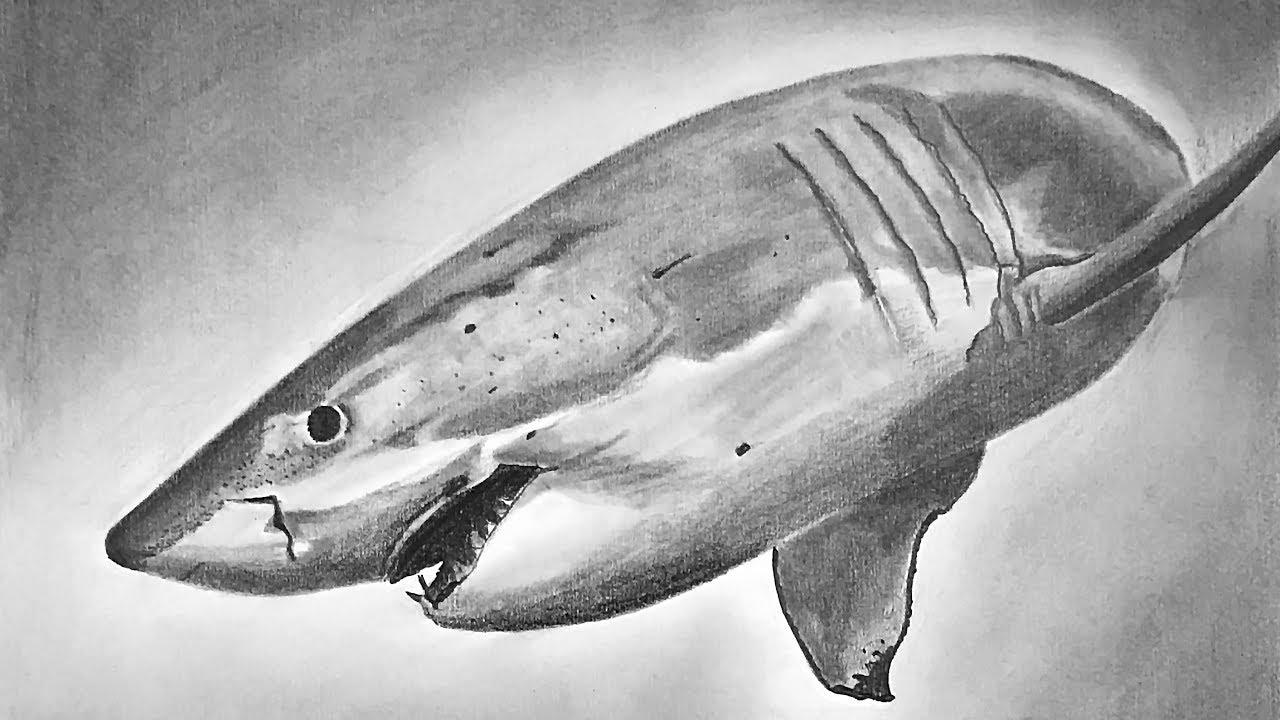 обнаружили акулы картинки карандашом нашей статье
