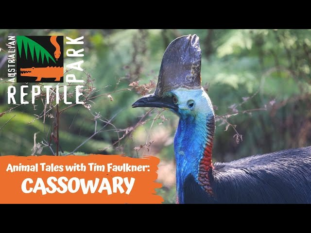 ANIMAL TALES WITH TIM FAULKNER | EPISODE 11 | CASSOWARY