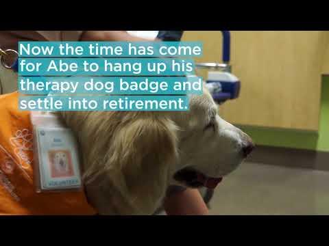 Seattle Children's Longest-Working Therapy Dog Bids 'Furwell