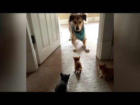 You WON'T LAST 10 SECONDS WITHOUT LAUGHING! - Ultra FUNNY ANIMAL videos