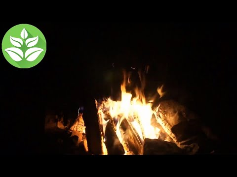 Bonfire at night. The fire burns for 10 hours. (the sound of a crackling fire). nature