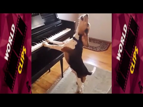 THE SINGING DOG-This dog sings!!!!|WORLD CLIPS PRESENTS HILARIOUS DOG COMPILATIONS#1|FEB 2019