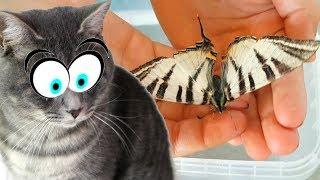 БАБОЧКА КАК У MAGIC FAMILY. Реакция кота Макса. Бабочкарий своими руками и все бабочки