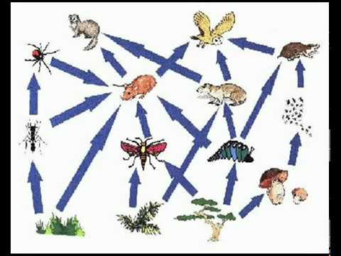 how to make a food web with decomposers