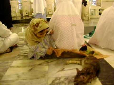 Subhanallah Kucing Di Masjidil Haram Sangat Sopan Doovi