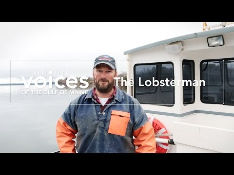 Voices of the Gulf of Maine: The Lobsterman