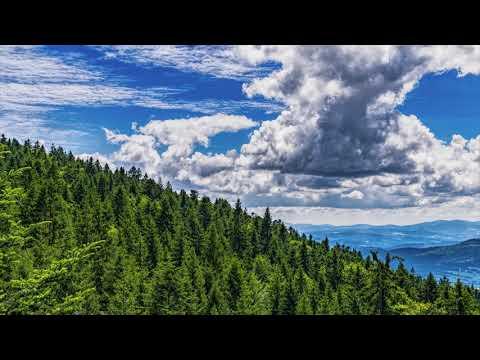 Vidéo Narration La forêt de Bavière: un joyau au coeur de l'Europe