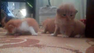 Смотреть всем!!!Как ведут себя малыши котята!!!