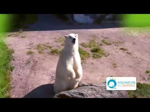 Invitation à l'Aquarium du Québec - Office du  tourisme