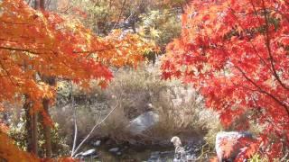 한웅 가을밤  꽃살강
