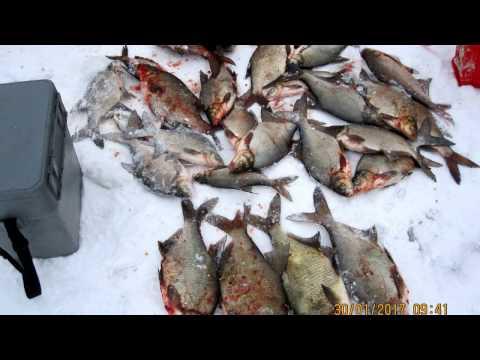 десногорск холмец рыбалка