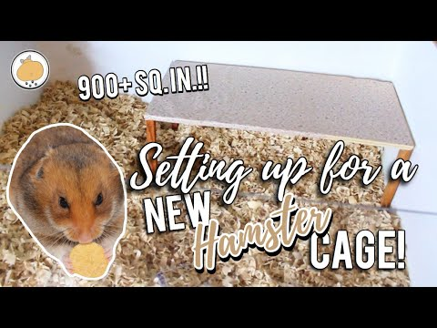preparing-for-new-natural-hamster-cage!- -german-cage-tour