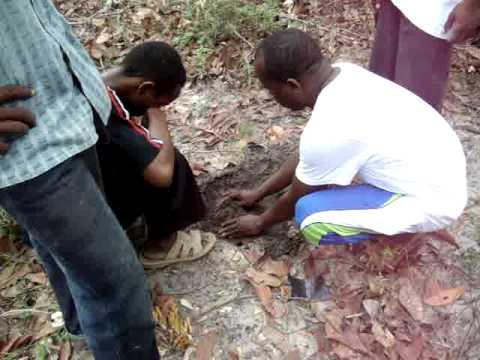 Tanzania Tree Planting