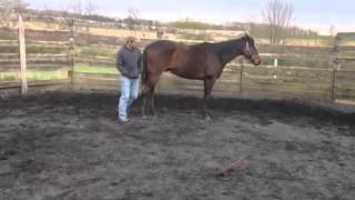 Horse for sale in Lancaster Pa