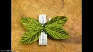 Repeat youtube video Creating A Glued Corsage