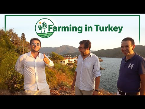 Investing Farming in Fethiye Turkey 🚜 One of the Biggest Agricultural Producers 🍅 Vlog #16 Part 2