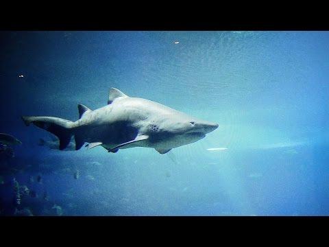 Mallorca Palma Aquarium In 4K (Ultra HD)