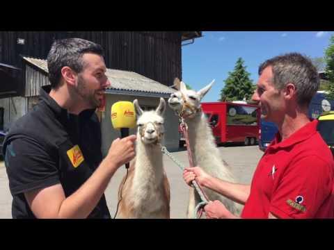 Susi und Strolchi: Zwei Lamas sind DAS neue Highlight in Hard